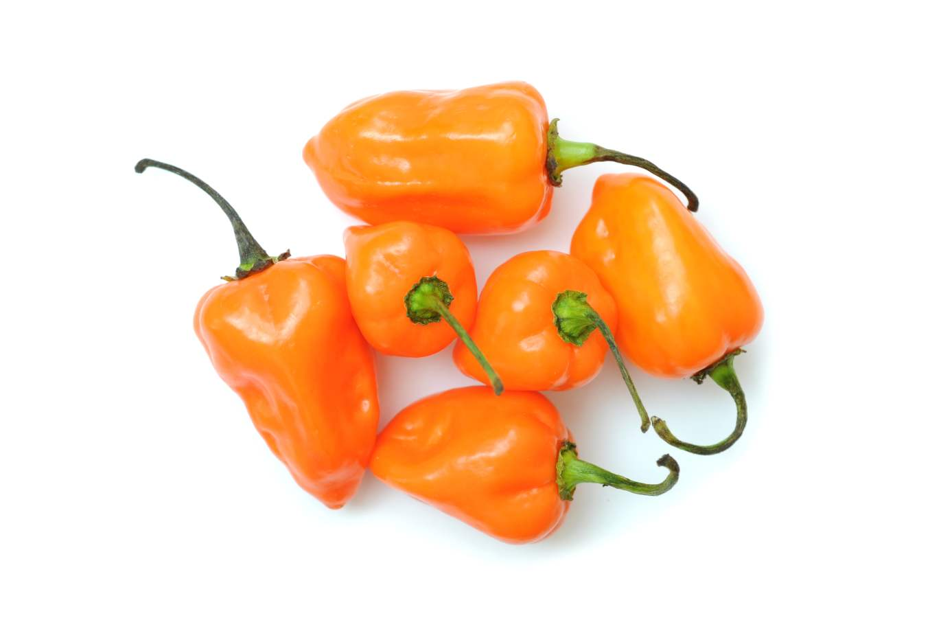 habanero-peppers-orange-1